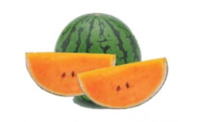 【期間限定】スイカ(サマーオレンジ) 1玉