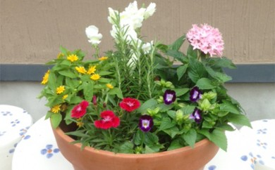 [№5862-0018]エディブルフラワー(食用花)寄せ植え