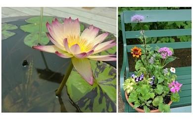 [定期お届け]北川村「モネの庭」から季節の花々の贈りもの。