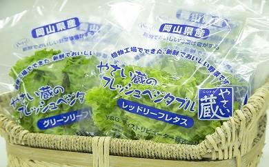 【A-28】工場野菜3種セット&オードブルスペシャルハムセット