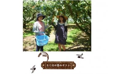 さくほの恵みギフト18枚+ 季節の果物狩り体験券1枚+その他お礼の品