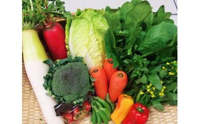 No.002 匝瑳市産の採れたて野菜セット
