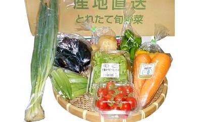 No.016 千葉産直センター青年部 新鮮野菜セット