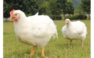 [№5729-0035]信州白鶏もも・信州白鶏むね4kg