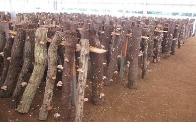 C-12 原木栽培の乾しいたけ・生しいたけ・しいたけ狩りセット