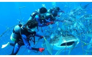 【2名様】圧巻!ジンベエザメ体験ダイビング