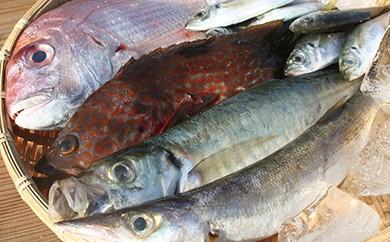 AS08 小豆島産 鮮魚詰合せ約3kg 【64pt】