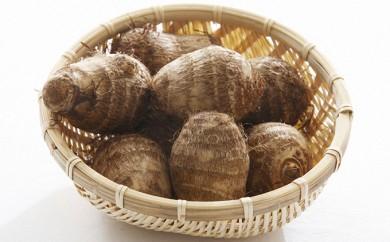[№5884-0003]ピロール農法で作った大野の里芋 5kg ※クレジット限定