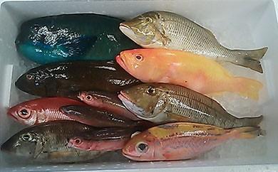 【AN19】鮮魚まるごとセット