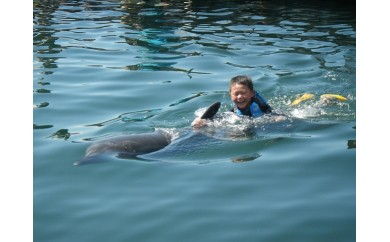 【D-901】イルカと一緒にスイムコース 招待券  3.0P