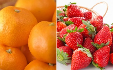 [№5875-0098]スズキヤ厳選 旬の果物詰め合わせセット(いちご、温州みかんなど)