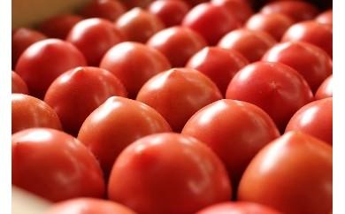 [B9] 深層水トマト