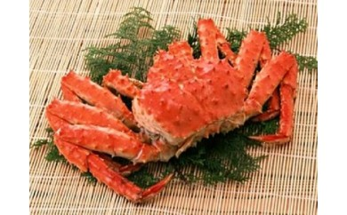 【4501】 ボイルたらば蟹(姿)