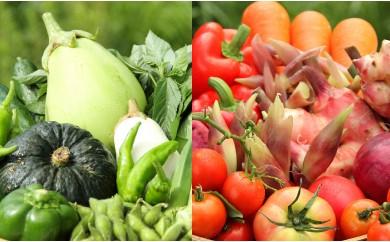 月2回お届け!南国高知より緑と赤のまごころ野菜セット【1日限定2セット】