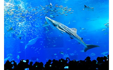 【迫力の大水槽】沖縄美ら海水族館 チケット引換券(家族券)