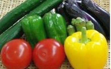 【先行予約】元気な夏野菜セット
