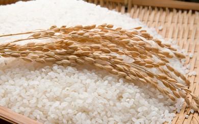 [№5636-0035]医食同源ひとよし米(10kg)
