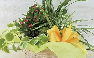 B-45 暮らしに花とみどりを届ける野市グリーンの花鉢と観葉植物のセット