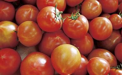 C-11 絶妙な酸味と甘みのバランス フルーツトマト