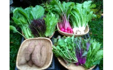 固定種野菜セット(5月から9月)