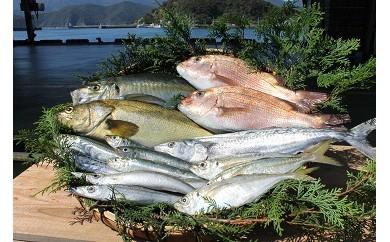 (B-7)「延岡市島野浦どれ新鮮鮮魚」セット