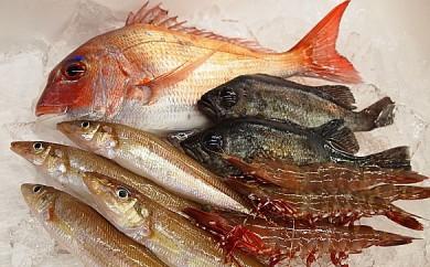B001.由良漁港の鮮魚セット