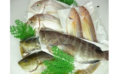 A23 「漁港直送」長崎の旬のお魚セット