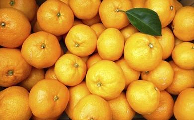 [№5691-0393]あきさわ園の土蔵熟成 蔵熟『蜜柑』みかん10kg