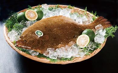 味よし、香りよし、見ためよし三拍子揃った極上の一品「蒲江産かぼすヒラメ」