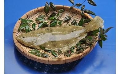 【CS30】「愛海の恵み」大分豊後水道産 天然ヒラメ(約2kg 1~2枚)【28,000pt】
