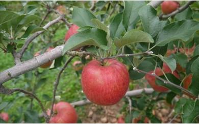 [№5865-0044]シナノスイート 約3kg(長野県認証 減農薬生産)※クレジット限定