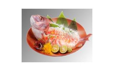 【P106】活〆真鯛姿造り1尾入【60pt】