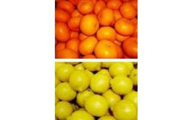みかん&レモンセット