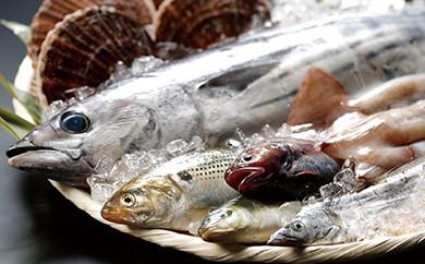 AH03 地元漁師さんと一緒に新鮮でおいしいお魚をお届けします!【唐桑漁師さんの鮮魚セットC】【20,000pt】
