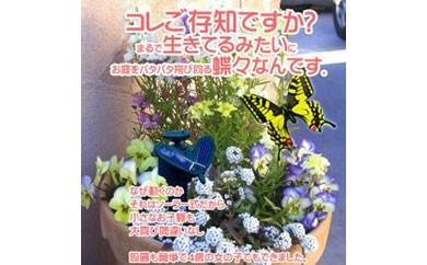 AH16 ソーラーバタフライ(モンシロチョウ+色付き蝶々) 【3,000pt】