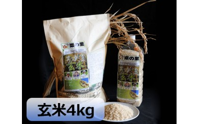 No.029 みがき玄米4kg