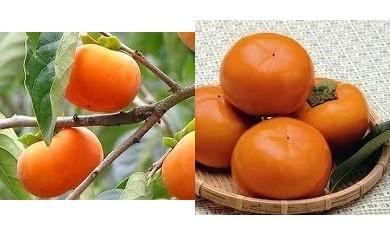 C みよし産の柿(※期間限定)