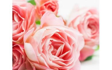 No.085 農家直送!厚木産バラの花束 スプレーL(ピンクまたは白)