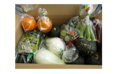 B-3 新作物研究会の季節の野菜詰め合わせ