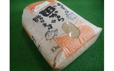 068 【数量限定】2019年新米 伊勢・小俣産ミルキークィーン 玄米10kg(精米発送)