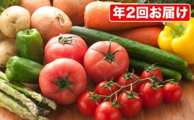 [№5862-0196]【引換券】厳選 たっぷり農薬不使用朝採れ野菜を年2回お届け!