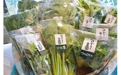 0520アグリー農園水耕栽培おまかせお野菜セット