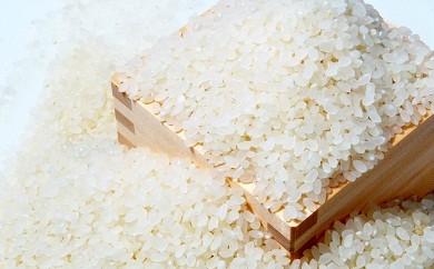 A01-05 お米【コシヒカリ 約11kg(精米)】 数量限定