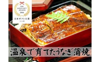 D-038 日本ギフト大賞受賞!純国産温泉うなぎ蒲焼(特大)