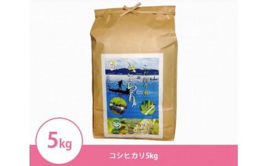 053コシヒカリ5kg特別栽培米『きらり米』 茨城県産 29年産米