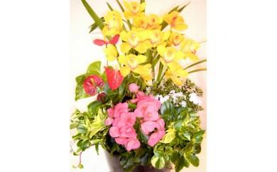 No.103 季節の花や観葉植物の寄せ植え アレンジメントB