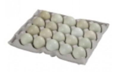 J2111 【青たまご】南米チリ原産アローカナの青い卵<20個入り>