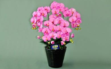 [№5809-0819]光触媒アートフラワー(造花) コチョウランM5本立 ピンク