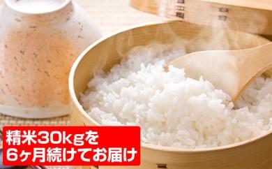 [№5644-0223]岐阜県揖斐郡産 はつしも 精米30kgを6ヶ月続けてお届け