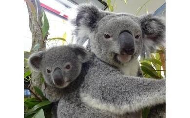 A1 こども動物自然公園優待券【年間パスポート引換券大人1名】